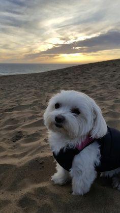 ROSIE at sunset