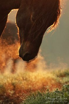 #horses, Blow out