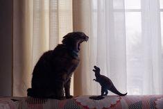 Disputa entre feras! #gatos #fera #bocejo