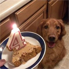 This was the recipe I made my dogs birthday cake with. I also added crushed almonds, marshmallows and dog treats. No honey, extra peanut butter. Doggie Birthday Cake - Allrecipes.com