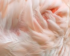 coral and feathers Shades Of Peach, Peach Blush, Pink Feathers, Just Peachy, Everything Pink, Pretty Pastel, Peach Colors, Pantone Color, Textures Patterns
