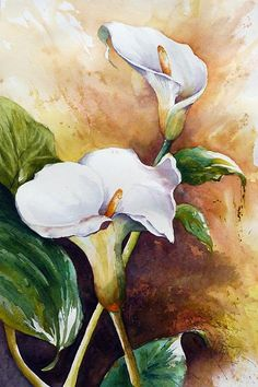 Title:  White Calla   Artist:  Christa Friedl   Medium:  Painting - Watercolor On Paper