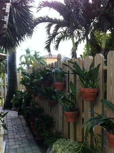 Orchids hanging in clay pots on a privacy fence using hangapot, the hidden hanger. Nice desfgn using angles.