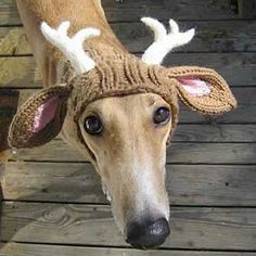Greyhound antlers? I've never known a better reason to learn to knit/crochet! =)