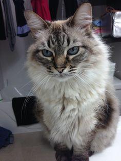 Kafka Cat | Pawshake