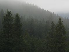 Foggy Forest Wallpaper High Definition #P46