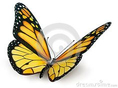 Butterfly - Download From Over 34 Million High Quality Stock Photos, Images, Vectors. Sign up for FREE today. Image: 35139513