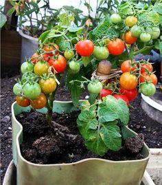potager balcon avec des plantes aromatiques, fruits et légumes divers