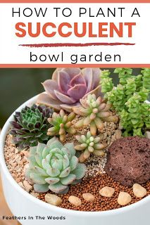 How to plant an indoor succulent garden in a bowl. Bowl gardens using plastic or glass are a little more tricky to plant. Here& how to plant a mini succulent garden in a bowl. Succulents In Glass, Succulent Bowls, Succulent Planter Diy, Growing Succulents, Succulent Gardening, Succulents In Containers, Succulent Arrangements, Planting Succulents, Indoor Succulents