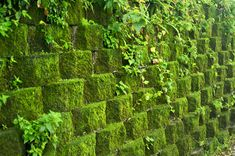 Google Image Result for http://upload.wikimedia.org/wikipedia/commons/f/f5/Taiwan_2009_JinGuaShi_Historic_Gold_Mine_Moss_Covered_Retaining_Wall_FRD_8940.jpg