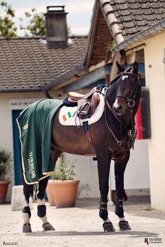 Shane Breen's Oldenburg stallion Balloon Cute Horses, Pretty Horses, Horse Love, Beautiful Horses, Saddles, Tack, Hunter Jumper, Dressage, Ponies
