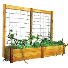 Fencing could be inserted in this frame for vine plants to grow on.  Having the bed in front of it fairly narrow should work well.