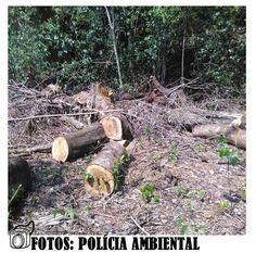 BLOG DE NOTÍCIAS DE MANOEL RIBAS E REGIÃO: Homens são presos por cortar seis mil metros de ár...