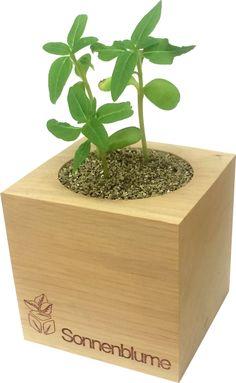 ecocube - Google Search Grow Kit, Planter Pots, Google Search, Sunflowers