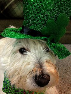 Happy st pats day from duncan