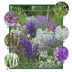 Paarse border Garden Living, Home And Garden, Lavandula Angustifolia Munstead, Rose Violette, Grands Pots, Shades Of Violet, Planting Plan, Purple Garden, Garden Borders