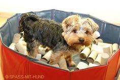 Die Schnüffelkiste und viele weitere Schnüffelspiele für Hunde auf Spass-mit-Hund.de