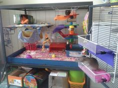 Inspiration - add hanging wire shelves to Critter Nation #rats