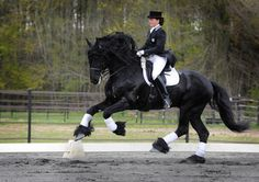 Friesian news:  Stallion Alert 475 just approved for breeding based on his dressage talent.  Just announced March 2, 2013