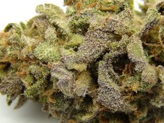 Buy OG Kush | 420 Family Dispensary | Place Order Now