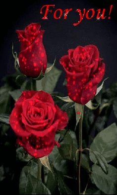 Розы для вас. I Wallpaper, Love Quotes, Gifs, Night, Flowers, Plants, Beautiful Flowers, Be Nice, Magick