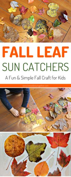These fall leaf sun catchers are the perfect, easy fall leaf craft for toddlers and preschoolers. Using just leaves from your yard and contact paper, they are a great way to celebrate Fall with your kids! From livewellplaytogether.com | #fallleafcrafts #fallcraftsforpreschoolers #preschoolcrafts #toddlercraftideas
