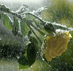 Sotto la pioggia... - Pagina 7 - Forum di Finanzaonline.com