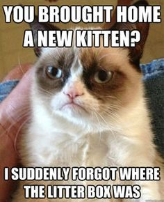 Oh, Grumpy Cat, don't be like that!