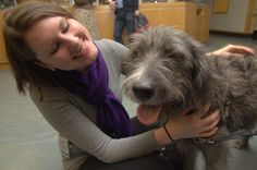 Do you believe in dog?: Can Therapy Dogs Help Students Handle Stress?