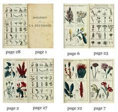 Botanical book printable