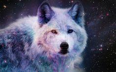 Galaxy Wolf by Darkplume on DeviantArt Wolf Images, Wolf Pictures, Wolf Photos, Beautiful Creatures, Animals Beautiful, Cute Animals, Baby Animals, Indian Wolf, Galaxy Wolf