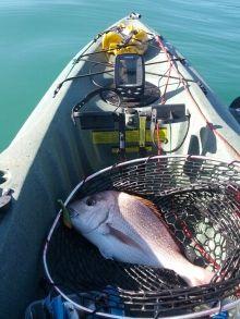 Big New Zealand Snapper caught while kayak fishing