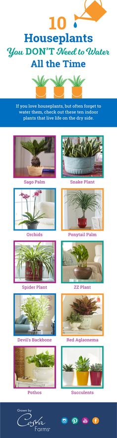 Forget to water your plants? No worry! These ten low-water houseplants are wonderfully forgiving and easy to grow in your home or office!