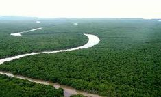 Resultado de imagem para florestas mata campos caatinga cerrado e manguezais