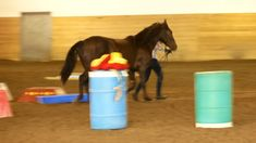 in hand trail - CHARMD show with Cesar Canadian Horse, Black Canadians, Horses For Sale, Ranch, Trail, Guest Ranch