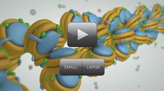 The Epigenome at a Glance. Particularly lovely graphics in this 90 second clip. From, and more at, http://learn.genetics.utah.edu/content/epigenetics/