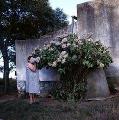 [][][] Alessandra Sanguinetti. The Adventures of Guille and Belinda and the Enigmatic Meaning of Their Dreams: Hydrangeas, 1999.