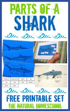 shark hat craft template.html