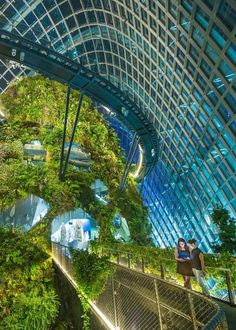 Cloud Forest In Singapore Maldives Activities Singapore Attractions Visit Singapore Honeymoon Planning