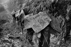 Sherpas (return of the Swiss expedition lead by Albert Eggler from the Everest), 1956 Marc Riboud, Nepal Kathmandu, Long Pictures, Become A Photographer, North Vietnam, Moving To Paris, French Photographers, Magnum Photos, Museum