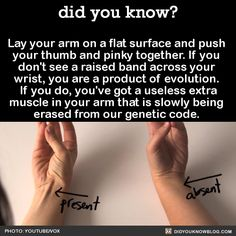 Apparently this muscle actually helps you hold a spear (something we as a majority haven't needed to do much). So you're either a product of evolution or a spearholder.