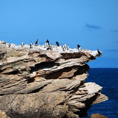#penguins #warrnambool #photography #blueskys #oddball by photography_jandm