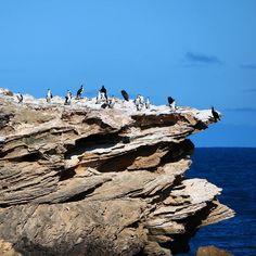 #penguins #warrnambool #photography #blueskys #oddball by photography_jandm