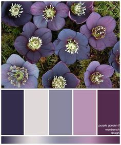 """garden II inspiration photo in the """"slurping purples"""" board. This is the color scheme for our new master bedroom!inspiration photo in the """"slurping purples"""" board. This is the color scheme for our new master bedroom! Color Schemes Colour Palettes, Colour Pallette, Color Palate, Color Combos, Purple Color Schemes, Purple Palette, Navy Color, Purple Paint Colors, Navy Paint"""