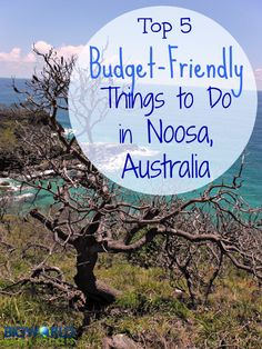 Top 5 Budget-Friendly Things to Do in Noosa, Australia {Big World Small Pockets}