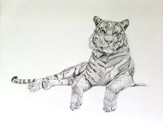 Items similar to Resting'' Original Tiger Drawing on Etsy Big Cats Art, Cat Art, Tiger Drawing, Fashion Drawing Dresses, Source Of Inspiration, Tigers, Piercings, The Originals, Tattoos