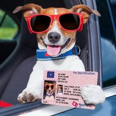 Your Pet ID