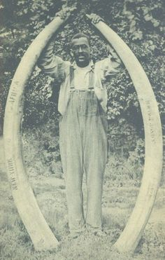 1880: USA. Escaped slave Billy Winter, rescued by George Read, stationmaster on the Underground Railroad, holding tusks then worth $1500 in Deep River, Connecticut, the largest ivory factory in the US in the late 1880s.