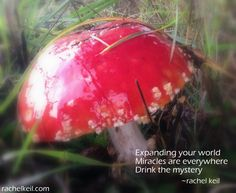 Drink in the Mystery (no potion required)-Haiku Blog