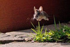 Als diese Maus im perfekten Moment getroffen wurde. | 29 Fotos, die Dir zeigen, was perfektes Timing ist